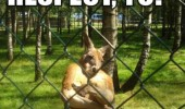 animal kangaroo respect funny pic picture lol meme