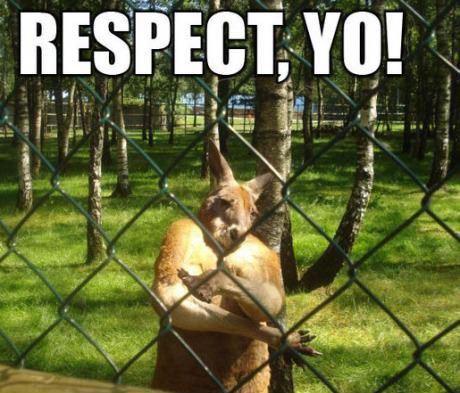 animal kangaroo respect funny pic picture lol meme