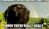 good looking dog zoolander animals funny lol pic picture meme