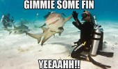 funny pics pictures pic picture image photo images photos lol gimmie fin shark animal meme
