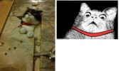 shocked cat meme rage comic funny pic picture lol