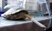 Turtle animal smoking funny pic picture lol