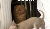 lolcat cat animal meme funny pic picture lol