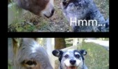 dog donkey animal meme funny pic picture lol