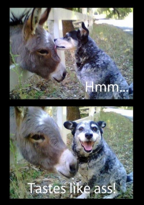 dog donkey animal meme funny pic picture lol