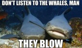 funny pics pictures pic picture image photo images photos lol animal shark fish whale meme