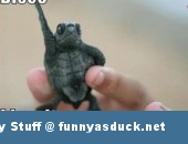 disco turtle funny pic picture lol animal meme
