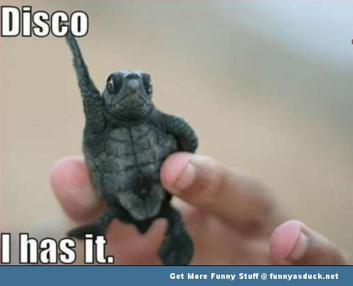 disco turtle funny pic picture lol animal meme