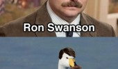 ron swanson swan ronson animal meme funny pics pictures pic picture image photo images photos lol