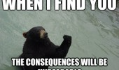 bear animal meme unbearable funny pics pictures pic picture image photo images photos lol