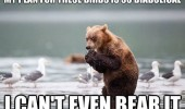 bear birds pun animal funny pics pictures pic picture image photo images photos lol