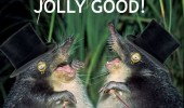 like a sir mole animal meme funny pics pictures pic picture image photo images photos lol