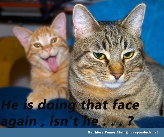 cat animal lolcat face funny pics pictures pic picture image photo images photos lol