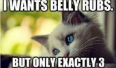 cat animal belly rubs bite you funny pics pictures pic picture image photo images photos lol