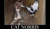 cat norris animal lolcat dog funny pics pictures pic picture image photo images photos lol