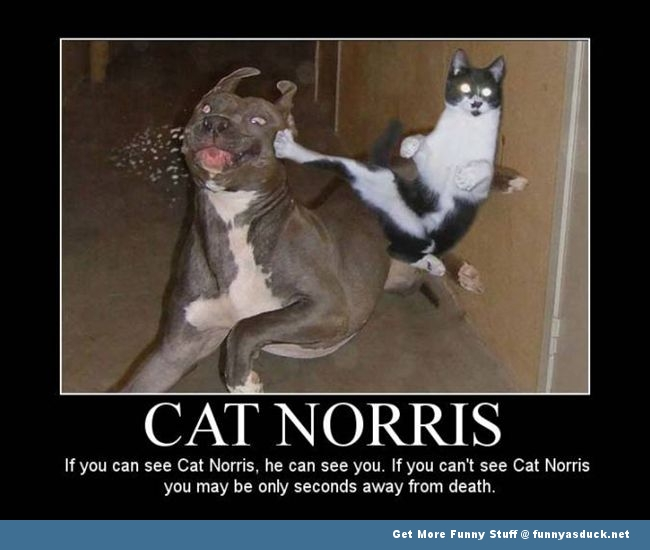 cat norris animal lolcat dog funny pics pictures pic picture image ...