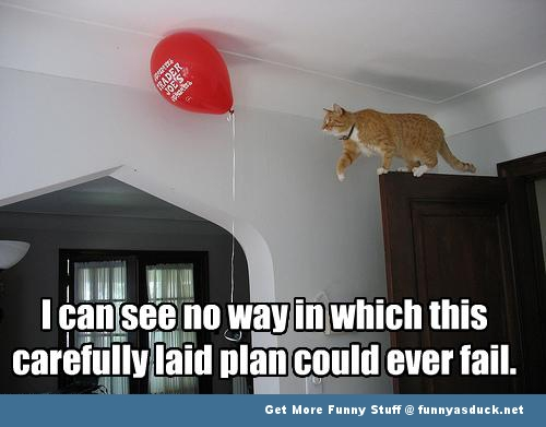 cat animal balloon fail funny pics pictures pic picture image photo images photos lol