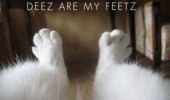 cat lolcat feet animal  funny pics pictures pic picture image photo images photos lol