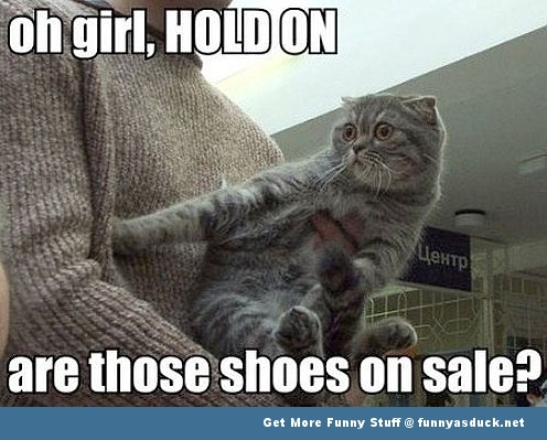cat lolcat animal shoes on sale funny pics pictures pic picture image photo images photos lol