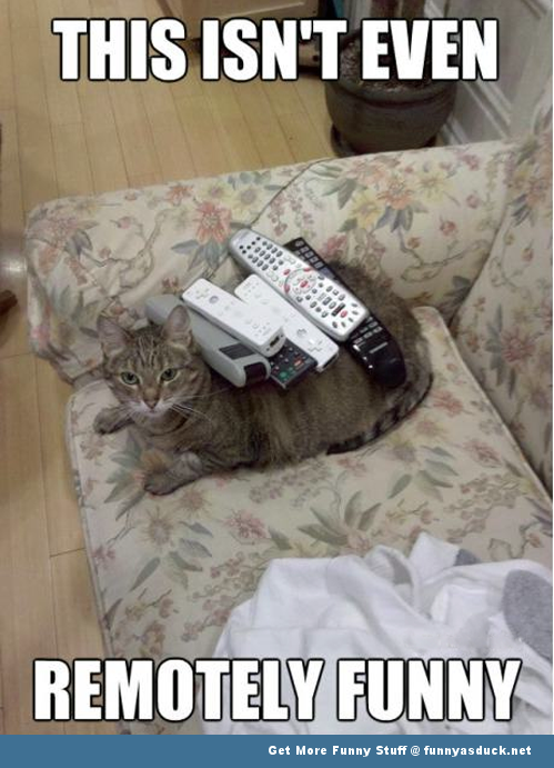 cat remote tv animal lolcat funny pics pictures pic picture image photo images photos lol