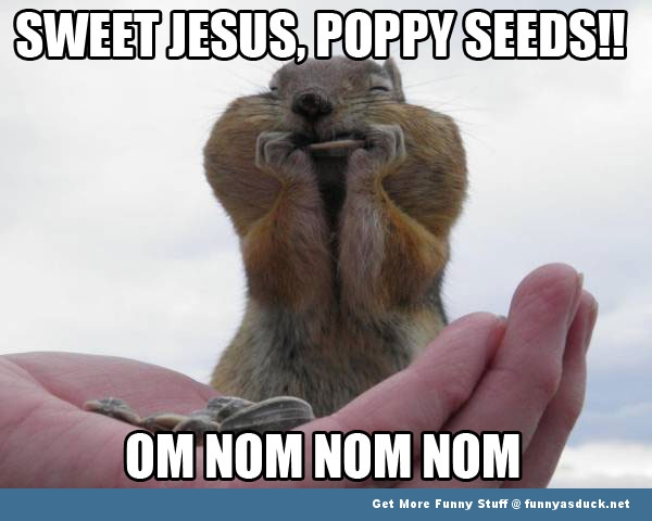 chipmunk animal meme eating seeds funny pics pictures pic picture image photo images photos lol