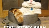 cat animal lolcat cool story  funny pics pictures pic picture image photo images photos lol