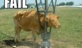 fail cow animal meme funny pics pictures pic picture image photo images photos lol