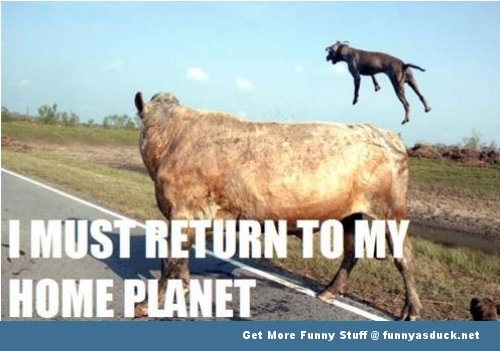 cow animal meme i must go funny pics pictures pic picture image photo images photos lol