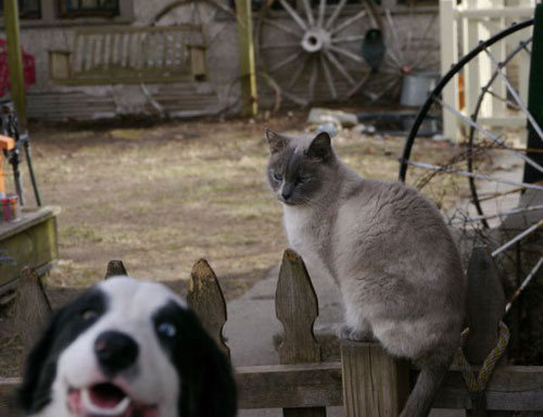 photo bomb dog cat animal funny pics pictures pic picture image photo images photos lol