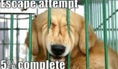 dog animal meme escape funny pics pictures pic picture image photo images photos lol