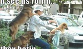 dog animal bike haters funny pics pictures pic picture image photo images photos lol