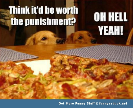 dogs pizza animal table food funny pics pictures pic picture image photo images photos lol