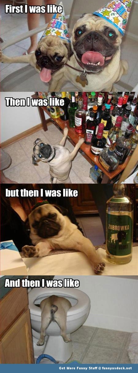 dog animal drunk party funny pics pictures pic picture image photo images photos lol