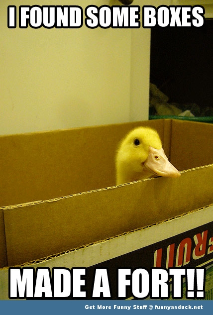 duck animal box fort funny pics pictures pic picture image photo images photos lol