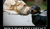 dog animal meme funny pics pictures pic picture image photo images photos lol