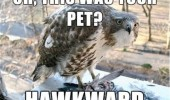 animal meme hawk bird funny pics pictures pic picture image photo images photos lol