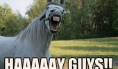 horse animal meme funny pic picture lol