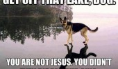 dog jesus animal pond funny pics pictures pic picture image photo images photos lol
