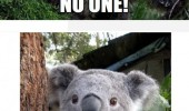 koala bear animal angry funny pics pictures pic picture image photo images photos lol
