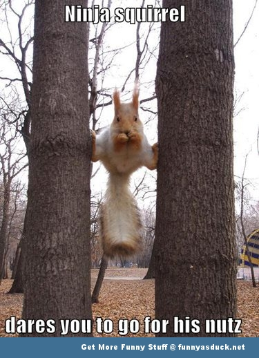 ninja squirrel meme animal  funny pics pictures pic picture image photo images photos lol
