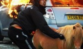pony riot animal meme fire  funny pics pictures pic picture image photo images photos lol