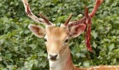 Rudolph santa xmas christmas animal reindeer funny pics pictures pic picture image photo images photos lol