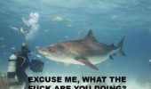 shark fish diver ocean funny pics pictures pic picture image photo images photos lol