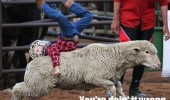 sheep kid doing it wrong funny pics pictures pic picture image photo images photos lol