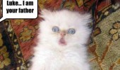 star wars shocked cat lolcat animal  funny pics pictures pic picture image photo images photos lol
