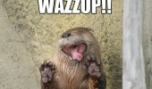 wazzup otter animal funny pics pictures pic picture image photo images photos lol
