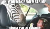 zebra kid car alphabet animal safari funny pics pictures pic picture image photo images photos lol