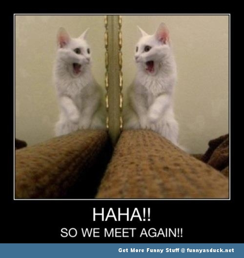we meet again cat lolcat meme animal funny pics pictures pic picture image photo images photos lol
