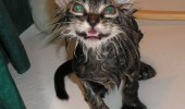 cat lolcat animal bath you die funny pics pictures pic picture image photo images photos lol