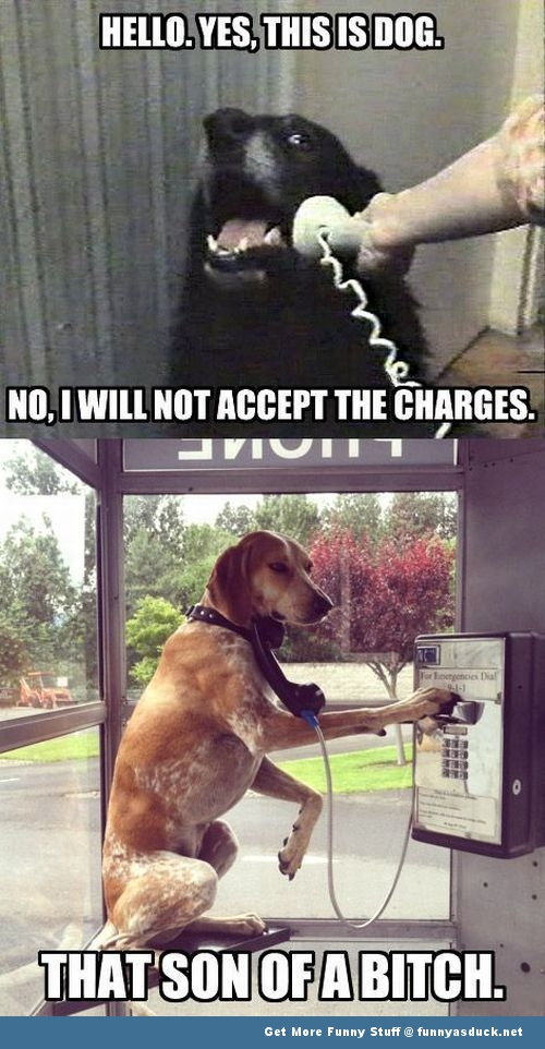 dogs on telephone meme funny pics pictures pic picture image photo images photos lol
